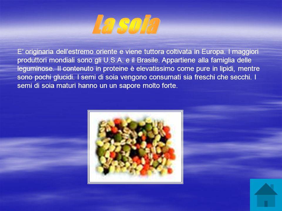 E originaria dellestremo oriente e viene tuttora coltivata in Europa. I maggiori produttori mondiali sono gli U.S.A. e il Brasile. Appartiene alla fam
