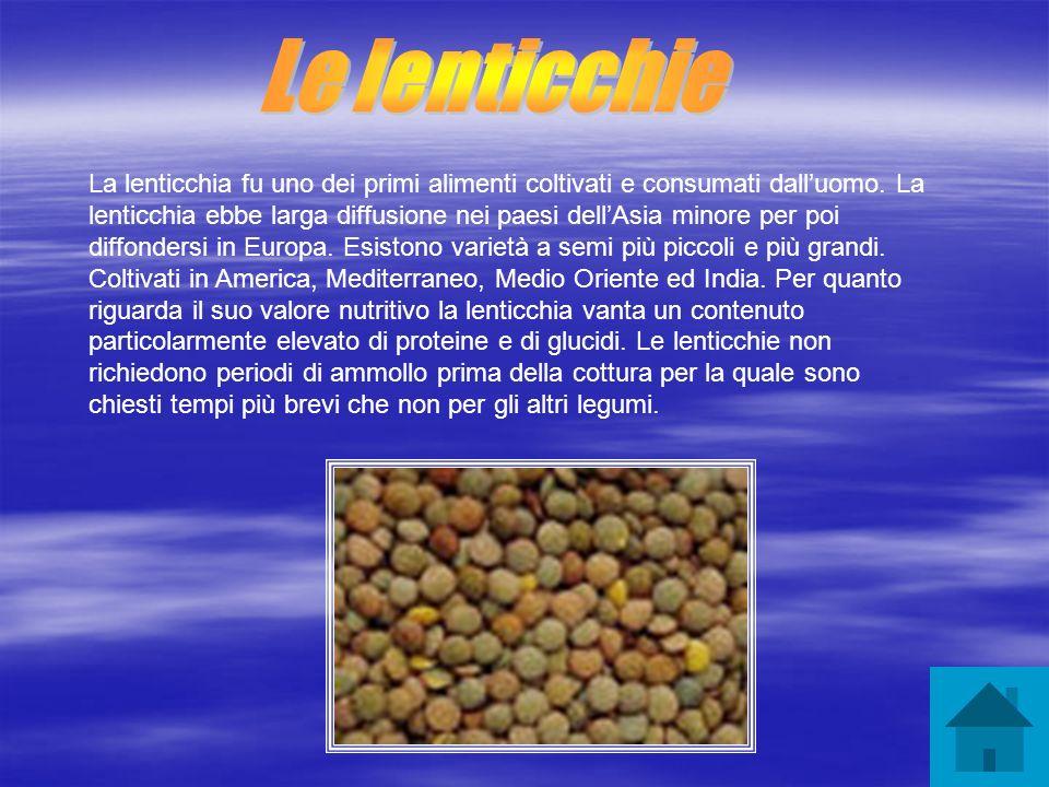 La lenticchia fu uno dei primi alimenti coltivati e consumati dalluomo. La lenticchia ebbe larga diffusione nei paesi dellAsia minore per poi diffonde