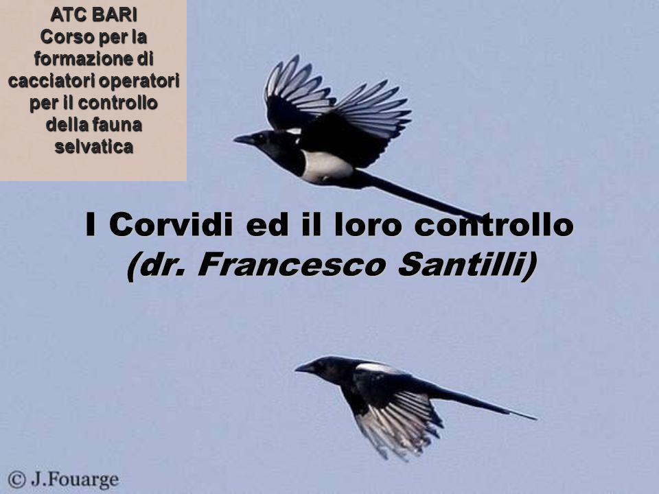 I Corvidi ed il loro controllo (dr. Francesco Santilli) ATC BARI Corso per la formazione di cacciatori operatori per il controllo della fauna selvatic