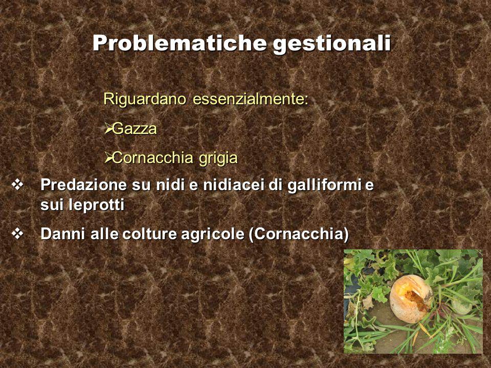 Problematiche gestionali Riguardano essenzialmente: Gazza Gazza Cornacchia grigia Cornacchia grigia Predazione su nidi e nidiacei di galliformi e sui