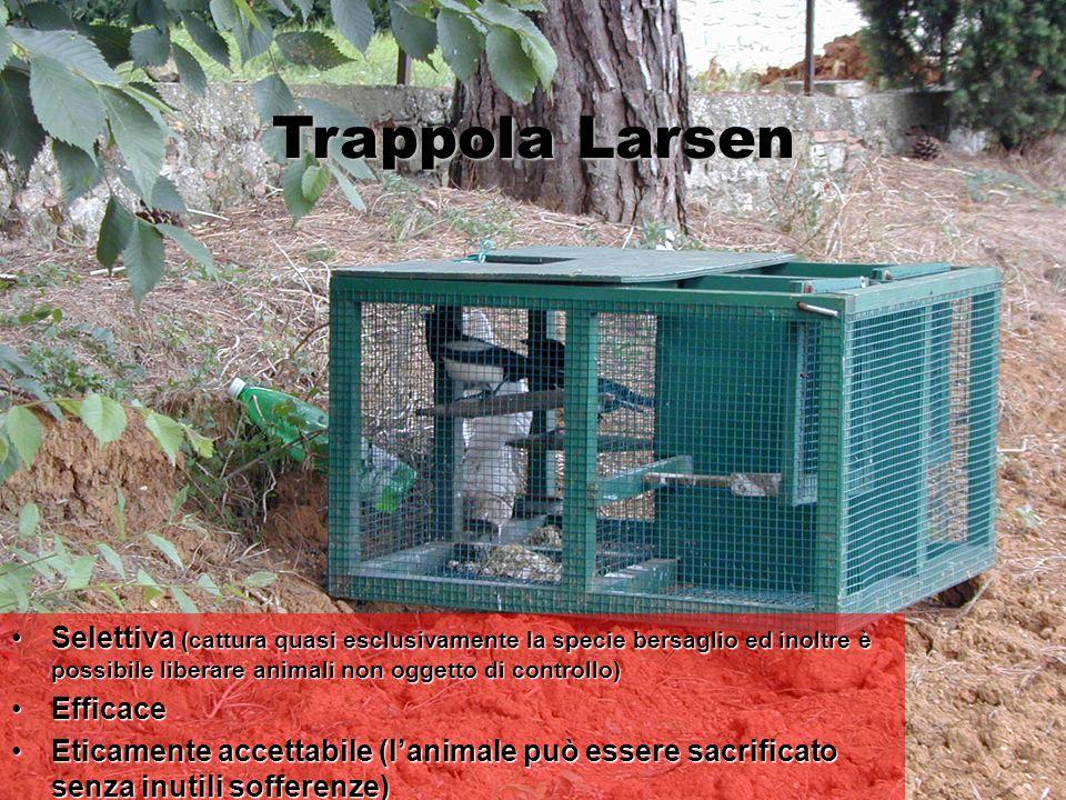 Trappola Larsen Selettiva (cattura quasi esclusivamente la specie bersaglio ed inoltre è possibile liberare animali non oggetto di controllo)Selettiva