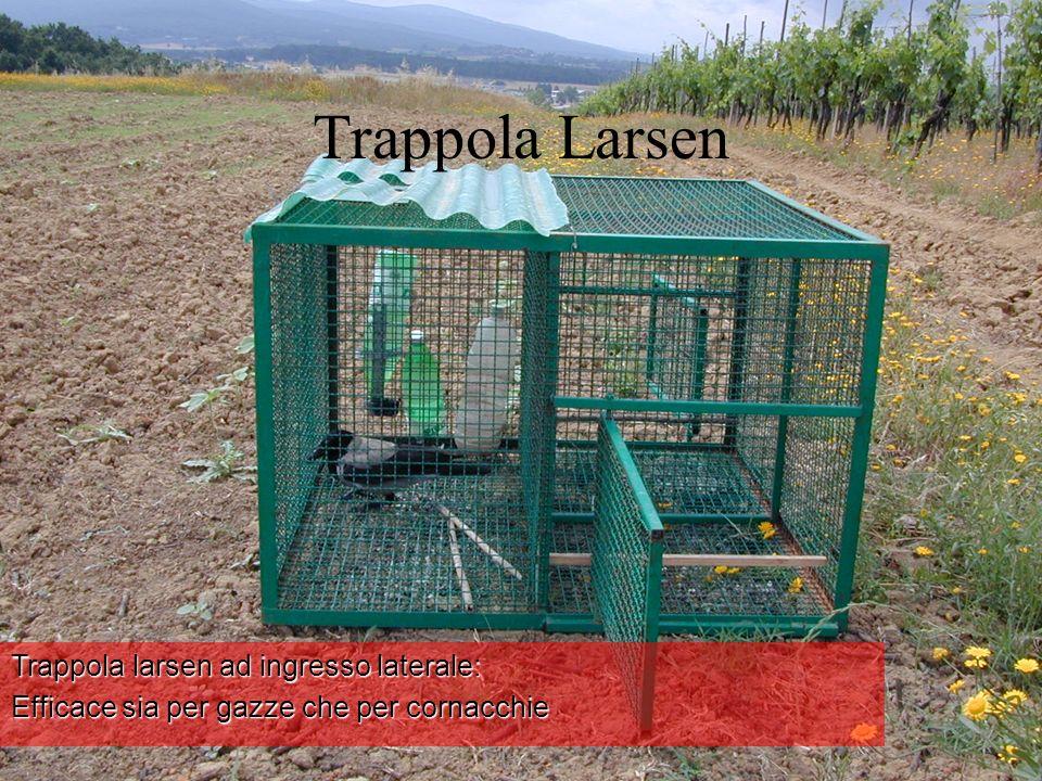 Trappola Larsen Trappola larsen ad ingresso laterale: Efficace sia per gazze che per cornacchie