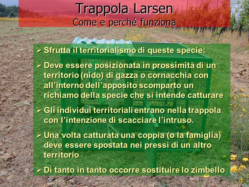 Trappola Larsen Come e perché funziona Sfrutta il territorialismo di queste specie: Sfrutta il territorialismo di queste specie: Deve essere posiziona
