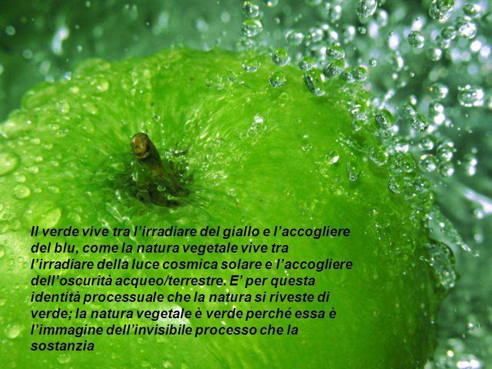 Il verde vive tra lirradiare del giallo e laccogliere del blu, come la natura vegetale vive tra lirradiare della luce cosmica solare e laccogliere del