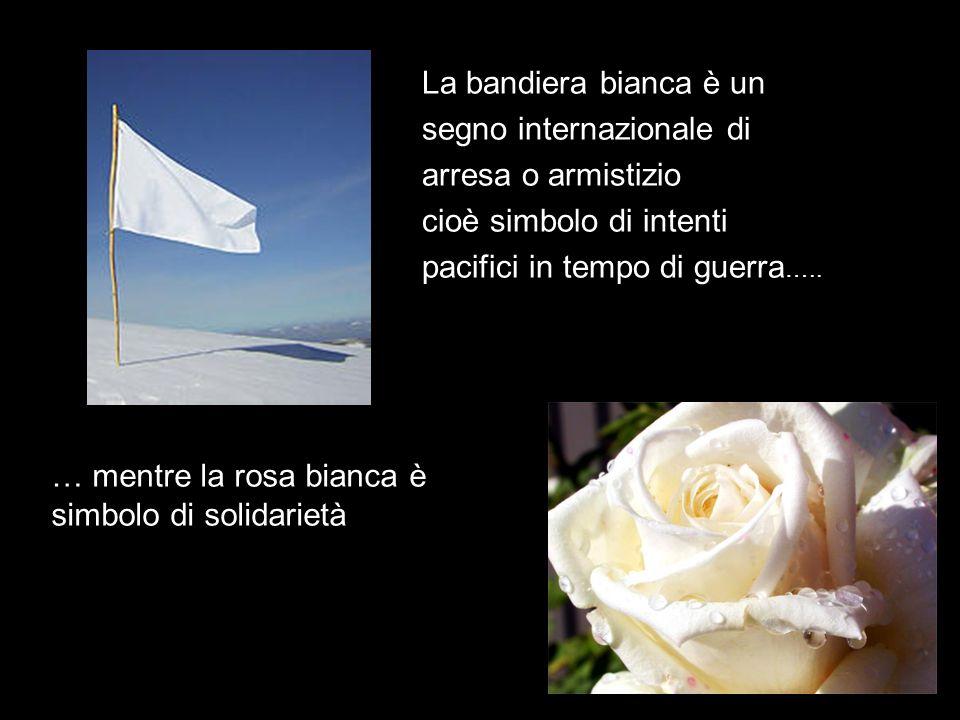 La bandiera bianca è un segno internazionale di arresa o armistizio cioè simbolo di intenti pacifici in tempo di guerra ….. … mentre la rosa bianca è