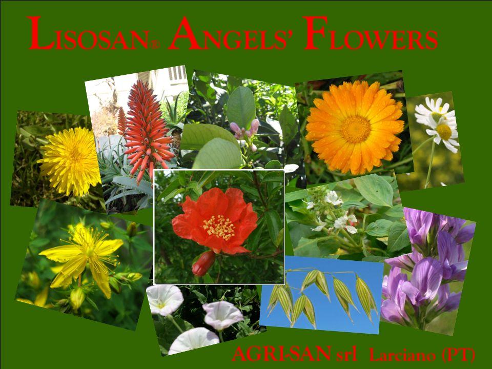 L ISOSAN ® A NGELS F LOWERS AGRI-SAN srl Larciano (PT)