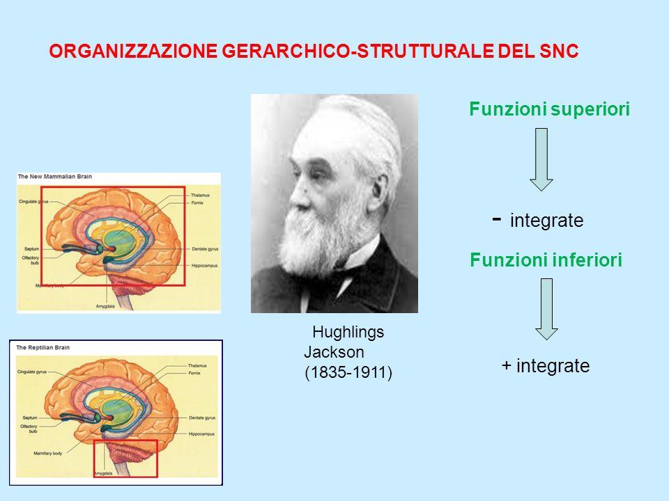 Funzioni superiori Hughlings Jackson (1835-1911) ORGANIZZAZIONE GERARCHICO-STRUTTURALE DEL SNC + integrate - integrate Funzioni inferiori