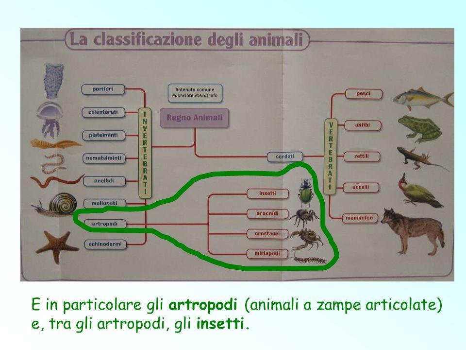 E in particolare gli artropodi (animali a zampe articolate) e, tra gli artropodi, gli insetti.