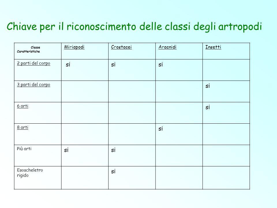 Classe Caratteristiche MiriapodiCrostaceiAracnidiInsetti 2 parti del corpo si 3 parti del corpo si 6 arti si 8 arti si Più arti si Esoscheletro rigido
