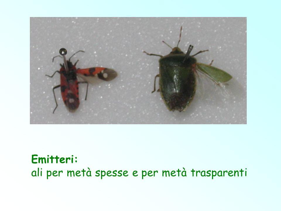 Emitteri: ali per metà spesse e per metà trasparenti