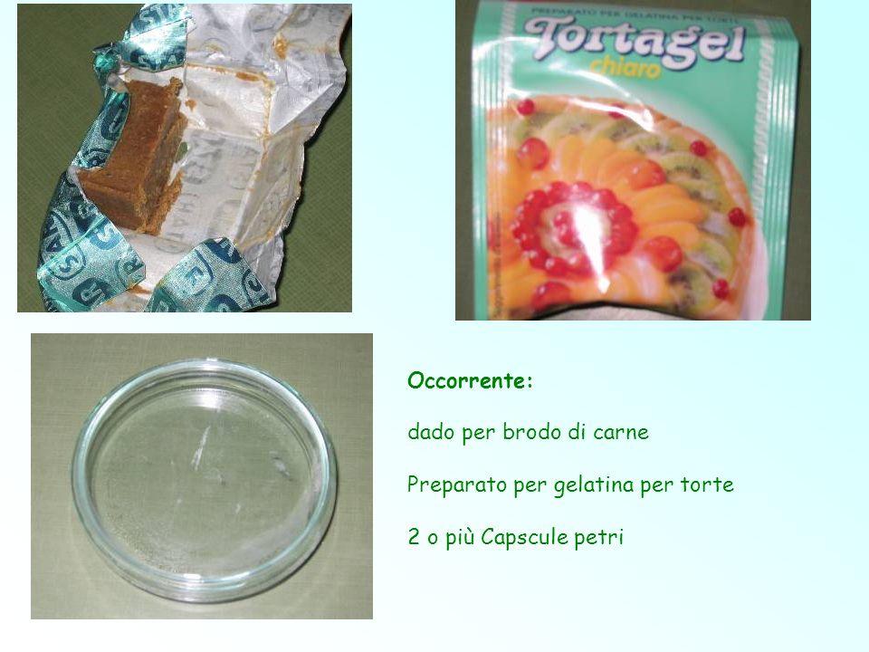 Occorrente: dado per brodo di carne Preparato per gelatina per torte 2 o più Capscule petri