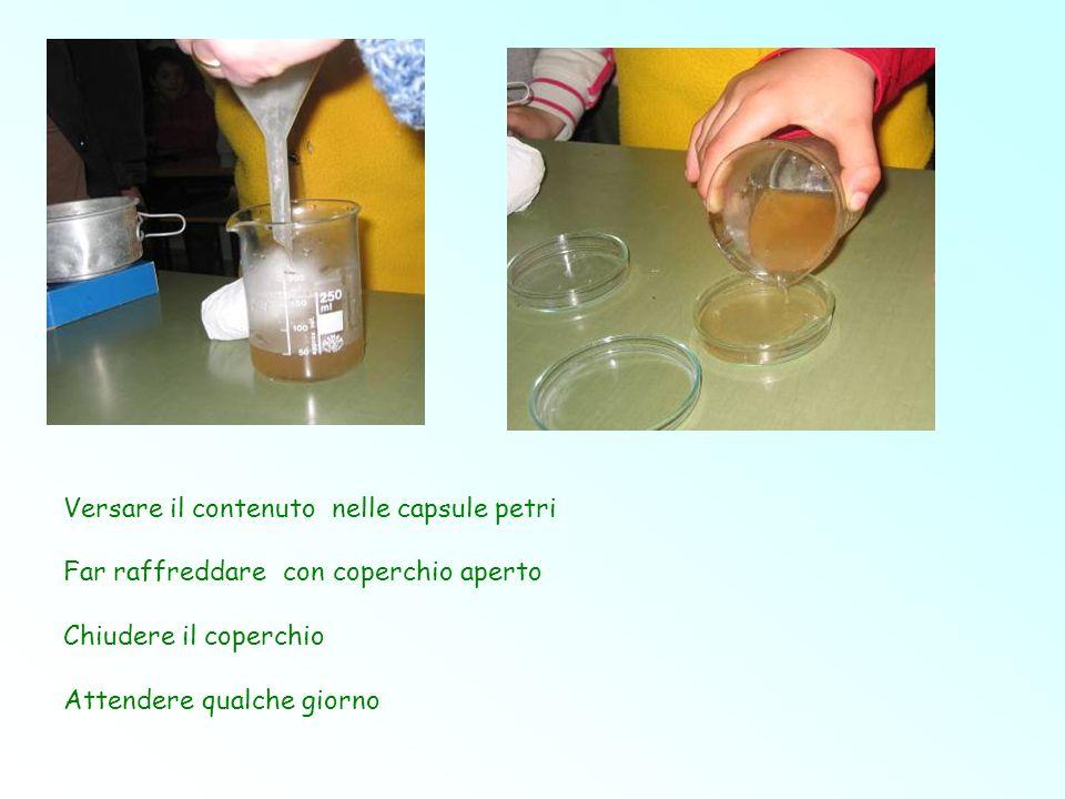 Versare il contenuto nelle capsule petri Far raffreddare con coperchio aperto Chiudere il coperchio Attendere qualche giorno