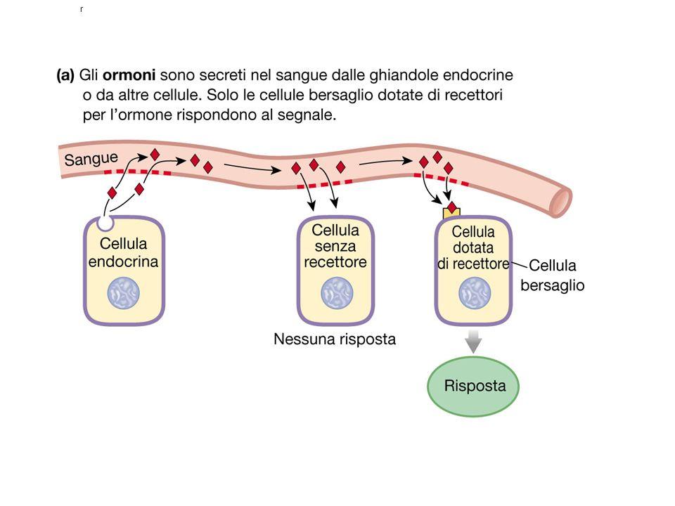 POLARI Aminoacidi Peptidi Proteine …… NON POLARI Steroidi