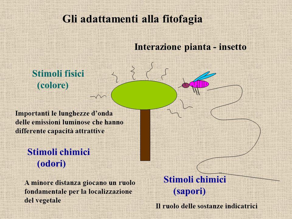 Interazione pianta - insetto Stimoli fisici (colore) Stimoli chimici (odori) Importanti le lunghezze donda delle emissioni luminose che hanno differen