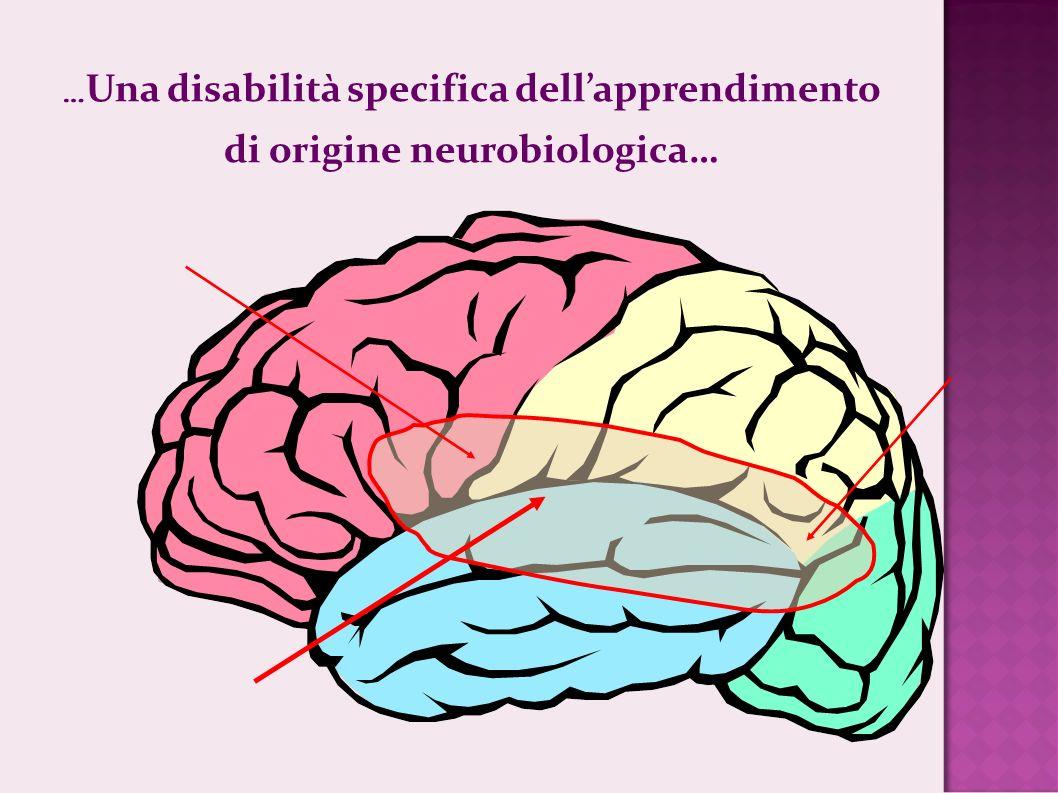 … Una disabilità specifica dellapprendimento di origine neurobiologica…