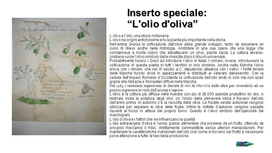 Inserto speciale: L'olio d'oliva I Lolivo e lolio, una storia millenaria Lolivo ha origini antichissime e fu la pianta più importante nella storia. Ne