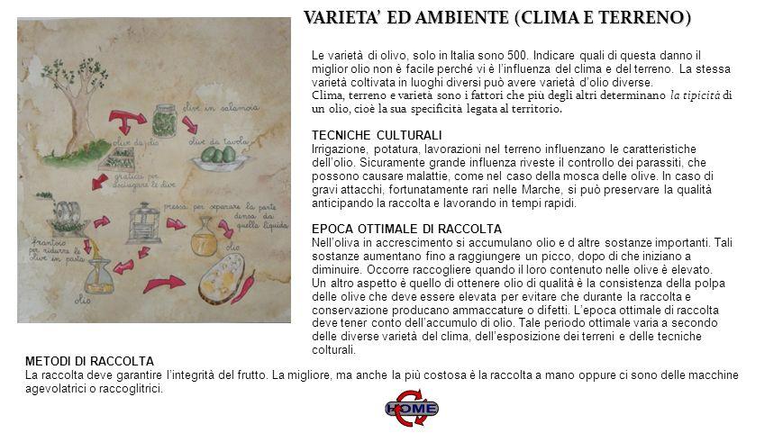 VARIETA ED AMBIENTE (CLIMA E TERRENO) VARIETA ED AMBIENTE (CLIMA E TERRENO) Le varietà di olivo, solo in Italia sono 500. Indicare quali di questa dan