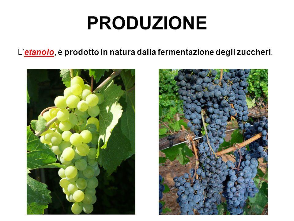 PRODUZIONE Letanolo, è prodotto in natura dalla fermentazione degli zuccheri,