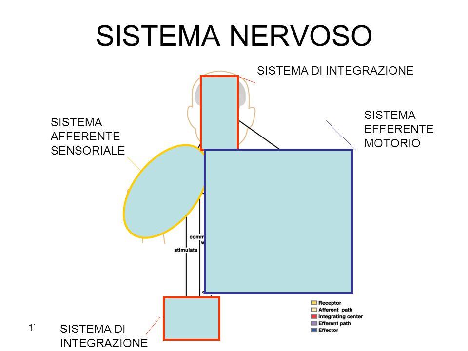 17/11/2013* SISTEMA NERVOSO SISTEMA AFFERENTE SENSORIALE SISTEMA DI INTEGRAZIONE SISTEMA EFFERENTE MOTORIO