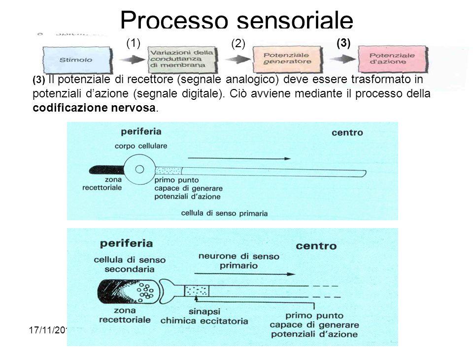 17/11/2013* Processo sensoriale (1) (2) (3) (3) Il potenziale di recettore (segnale analogico) deve essere trasformato in potenziali dazione (segnale
