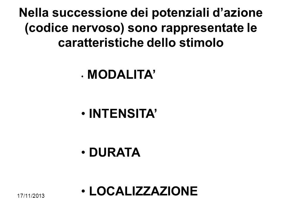 17/11/2013* Nella successione dei potenziali dazione (codice nervoso) sono rappresentate le caratteristiche dello stimolo MODALITA INTENSITA DURATA LO