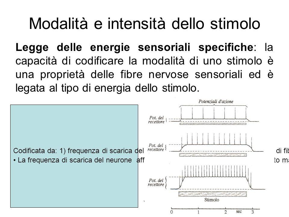17/11/2013* Modalità e intensità dello stimolo Legge delle energie sensoriali specifiche: la capacità di codificare la modalità di uno stimolo è una p