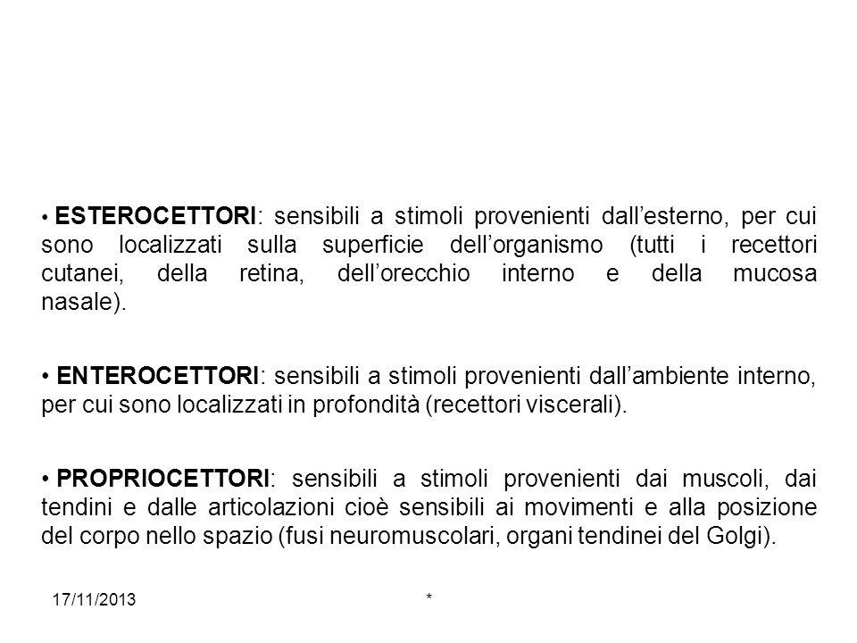 17/11/2013* ESTEROCETTORI: sensibili a stimoli provenienti dallesterno, per cui sono localizzati sulla superficie dellorganismo (tutti i recettori cut