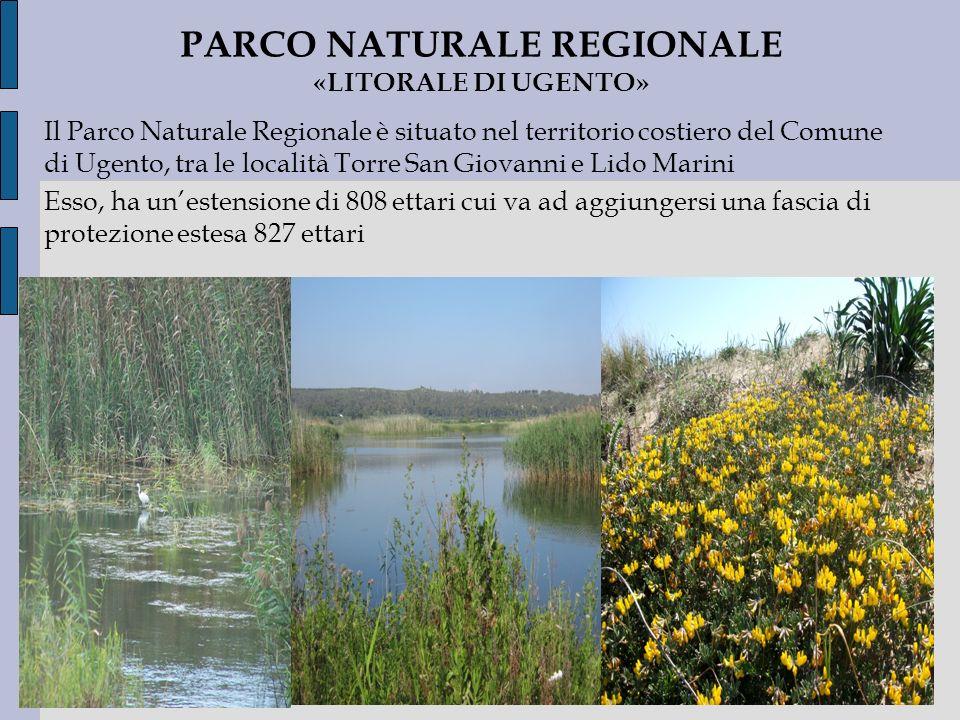 Il Parco Naturale Regionale è situato nel territorio costiero del Comune di Ugento, tra le località Torre San Giovanni e Lido Marini Esso, ha unestens