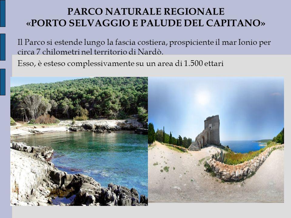 PARCO NATURALE REGIONALE «PORTO SELVAGGIO E PALUDE DEL CAPITANO» Il Parco si estende lungo la fascia costiera, prospiciente il mar Ionio per circa 7 c