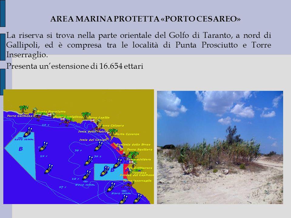 AREA MARINA PROTETTA «PORTO CESAREO» La riserva si trova nella parte orientale del Golfo di Taranto, a nord di Gallipoli, ed è compresa tra le localit