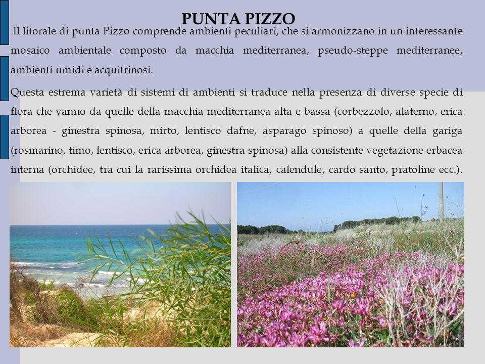 Il litorale di punta Pizzo comprende ambienti peculiari, che si armonizzano in un interessante mosaico ambientale composto da macchia mediterranea, ps