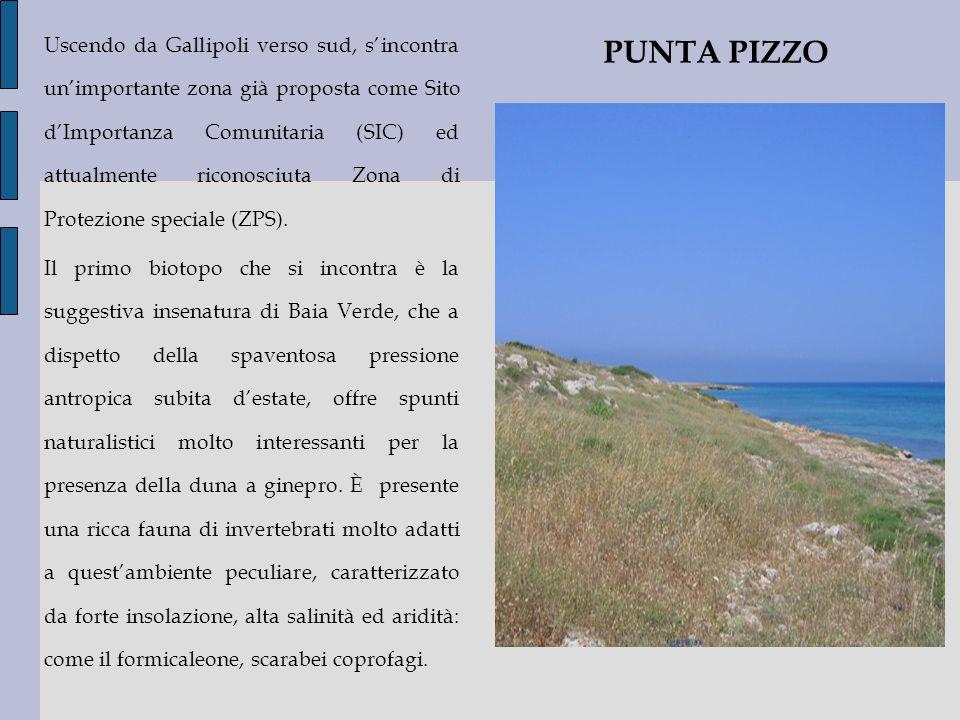 Uscendo da Gallipoli verso sud, sincontra unimportante zona già proposta come Sito dImportanza Comunitaria (SIC) ed attualmente riconosciuta Zona di P