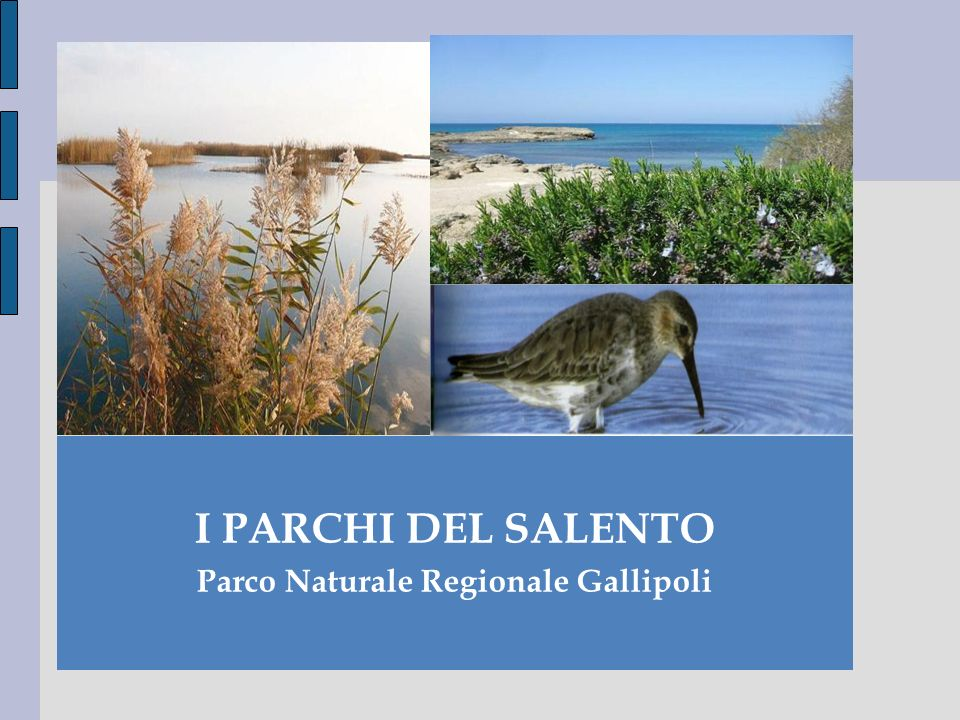 Il presente lavoro delinea lattuale sistema delle aree protette della provincia di Lecce.