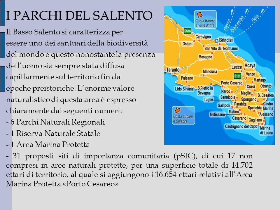 I PARCHI DEL SALENTO Il Basso Salento si caratterizza per essere uno dei santuari della biodiversità del mondo e questo nonostante la presenza delluom