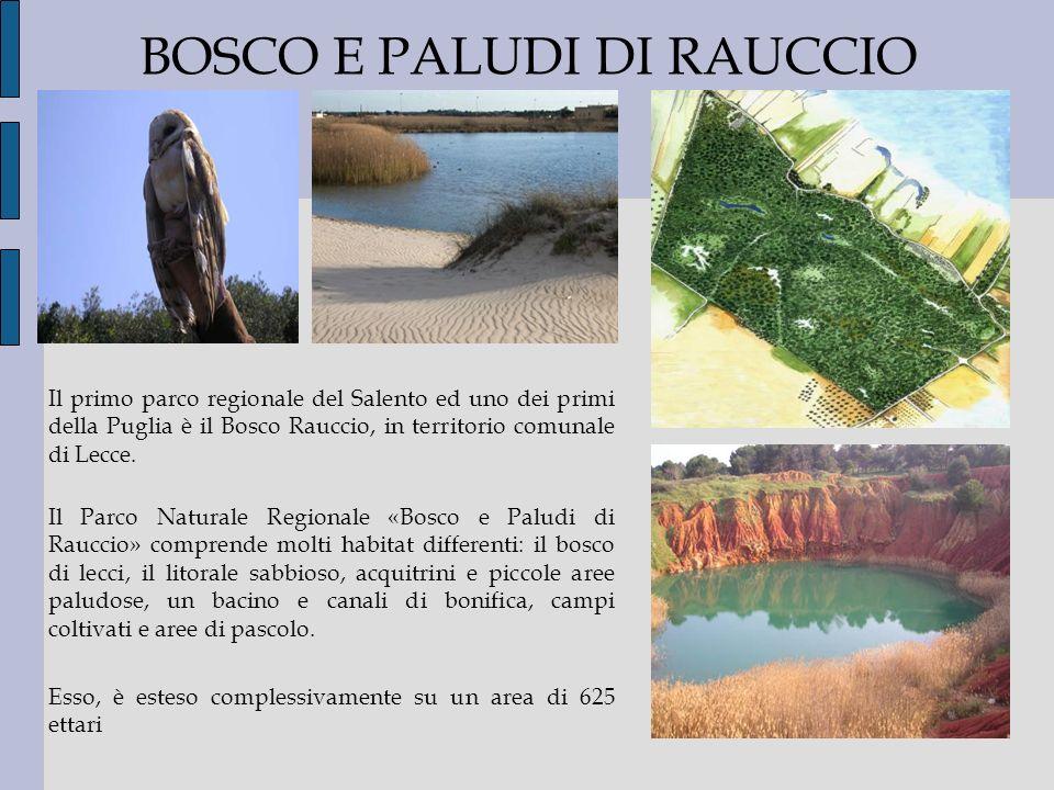 BOSCO E PALUDI DI RAUCCIO Il primo parco regionale del Salento ed uno dei primi della Puglia è il Bosco Rauccio, in territorio comunale di Lecce. Il P
