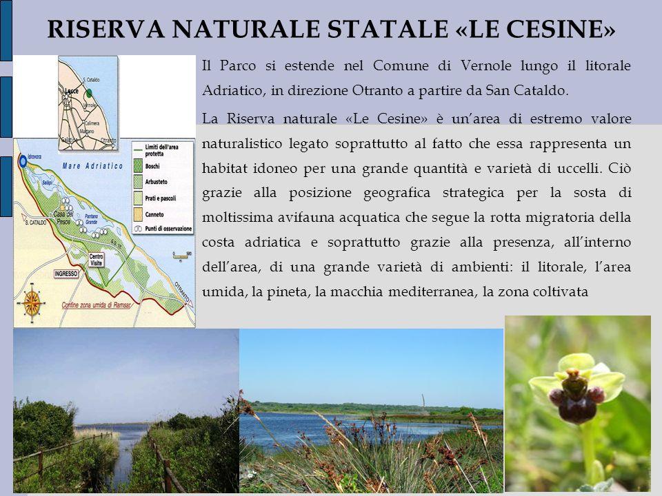 RISERVA NATURALE STATALE «LE CESINE» Il Parco si estende nel Comune di Vernole lungo il litorale Adriatico, in direzione Otranto a partire da San Cata
