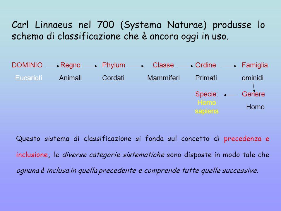 Questo sistema di classificazione si fonda sul concetto di precedenza e inclusione, le diverse categorie sistematiche sono disposte in modo tale che o