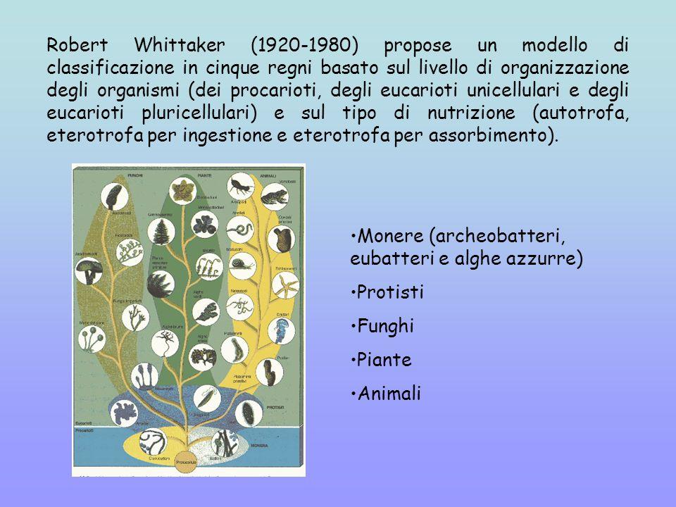 Robert Whittaker (1920-1980) propose un modello di classificazione in cinque regni basato sul livello di organizzazione degli organismi (dei procarioti, degli eucarioti unicellulari e degli eucarioti pluricellulari) e sul tipo di nutrizione (autotrofa, eterotrofa per ingestione e eterotrofa per assorbimento).