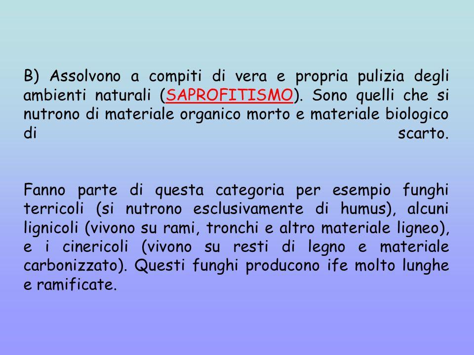 B) Assolvono a compiti di vera e propria pulizia degli ambienti naturali (SAPROFITISMO).