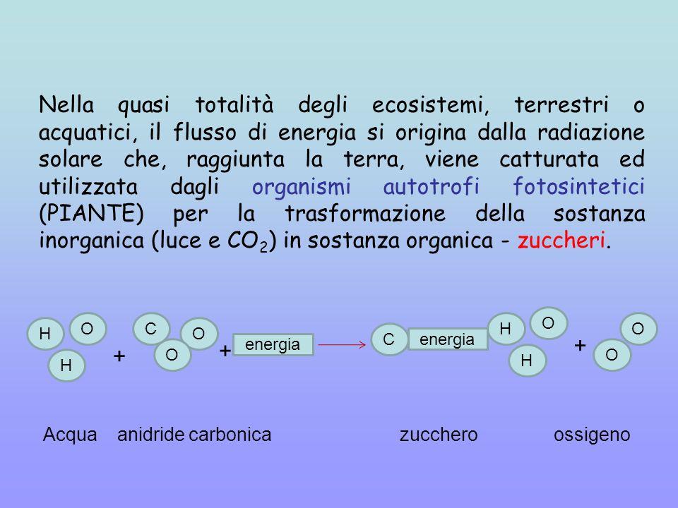 Nella quasi totalità degli ecosistemi, terrestri o acquatici, il flusso di energia si origina dalla radiazione solare che, raggiunta la terra, viene catturata ed utilizzata dagli organismi autotrofi fotosintetici (PIANTE) per la trasformazione della sostanza inorganica (luce e CO 2 ) in sostanza organica - zuccheri.