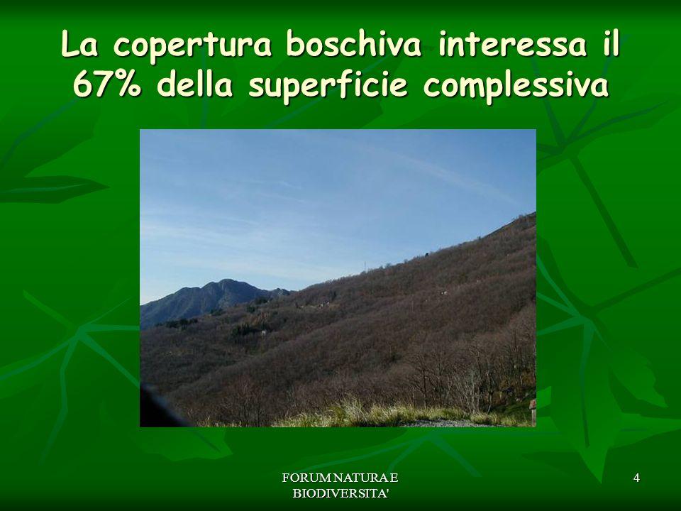 FORUM NATURA E BIODIVERSITA' 4 La copertura boschiva interessa il 67% della superficie complessiva
