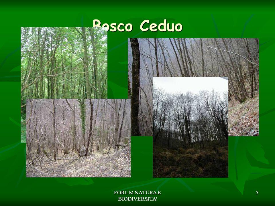 FORUM NATURA E BIODIVERSITA' 5 Bosco Ceduo