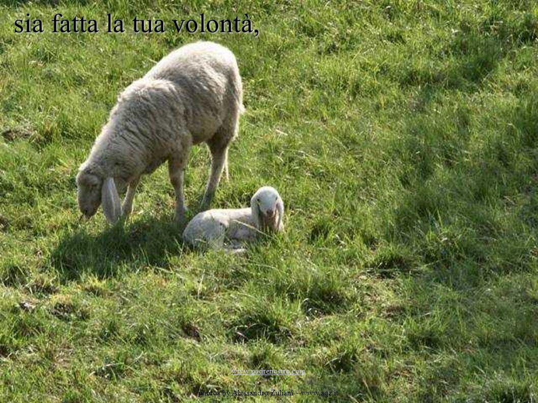 sia fatta la tua volontà, www.padrenostro.com photos by Alessandro Zuliani - www.aqz.it