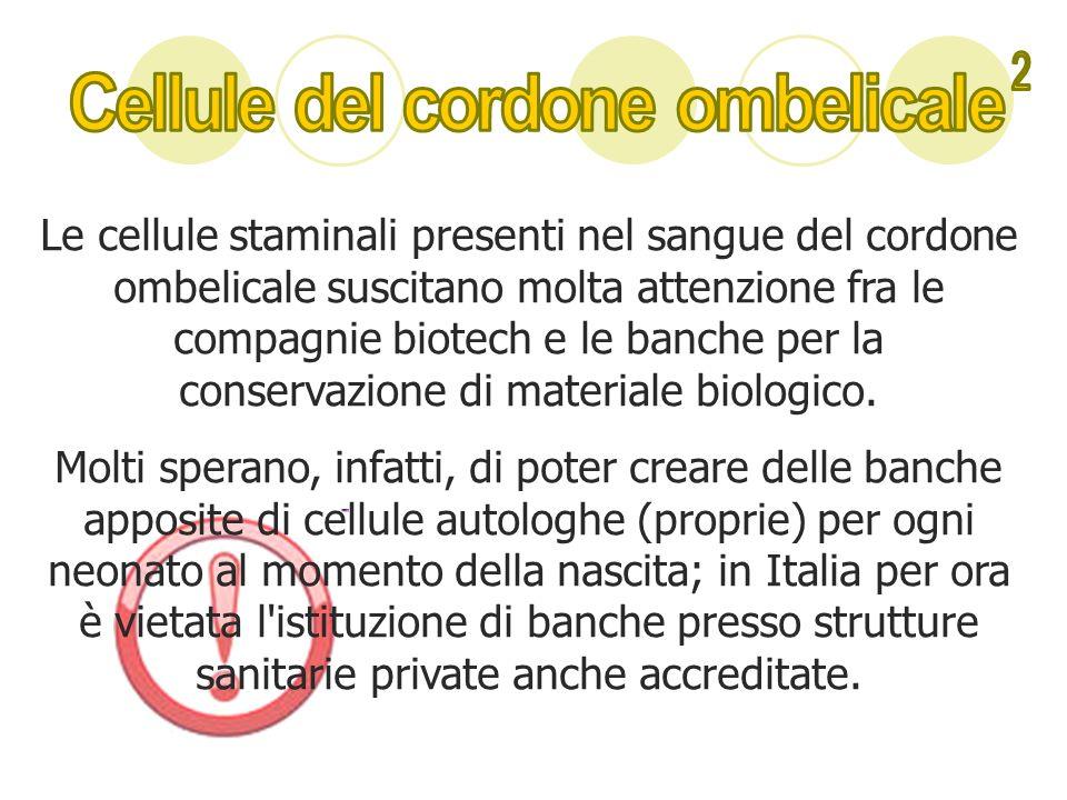 Le cellule staminali presenti nel sangue del cordone ombelicale suscitano molta attenzione fra le compagnie biotech e le banche per la conservazione d