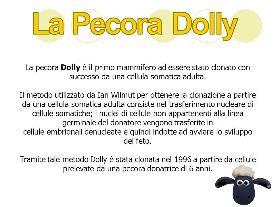 La pecora Dolly è il primo mammifero ad essere stato clonato con successo da una cellula somatica adulta. Il metodo utilizzato da Ian Wilmut per otten