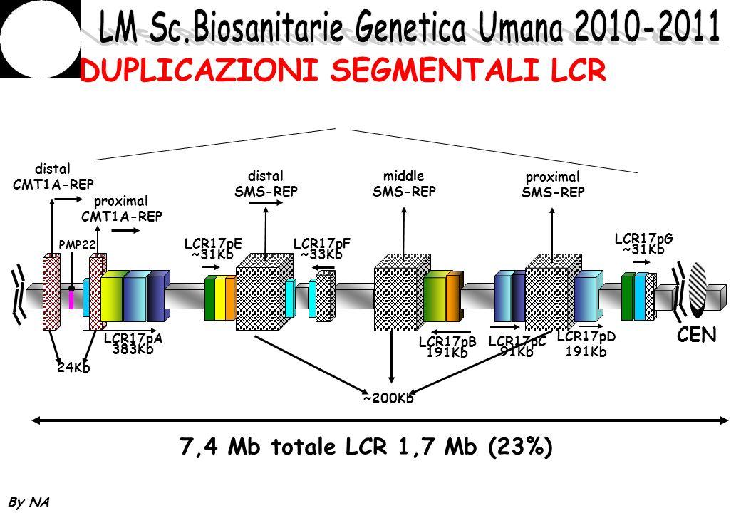 By NA DUPLICAZIONI SEGMENTALI LCR PMP22 distal CMT1A-REP proximal CMT1A-REP 24Kb LCR17pA 383Kb LCR17pE ~31Kb distal SMS-REP LCR17pF ~33Kb middle SMS-R