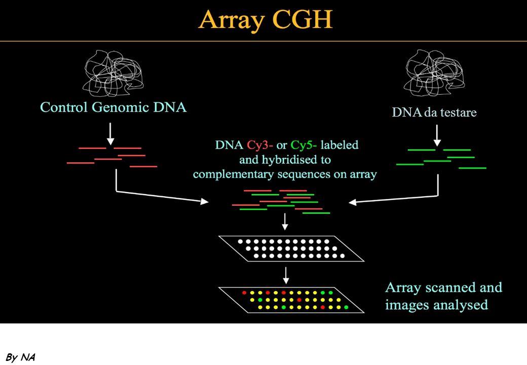 By NA DNA da testare