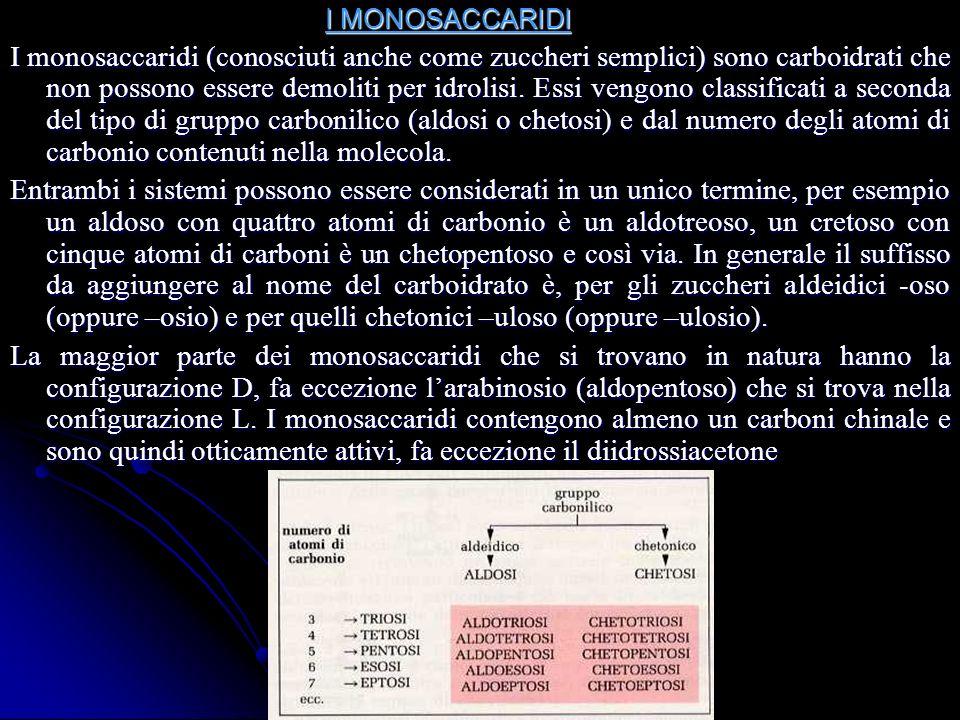 I MONOSACCARIDI I MONOSACCARIDI I monosaccaridi (conosciuti anche come zuccheri semplici) sono carboidrati che non possono essere demoliti per idrolisi.
