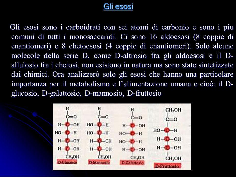 Gli esosi Gli esosi sono i carboidrati con sei atomi di carbonio e sono i piu comuni di tutti i monosaccaridi.