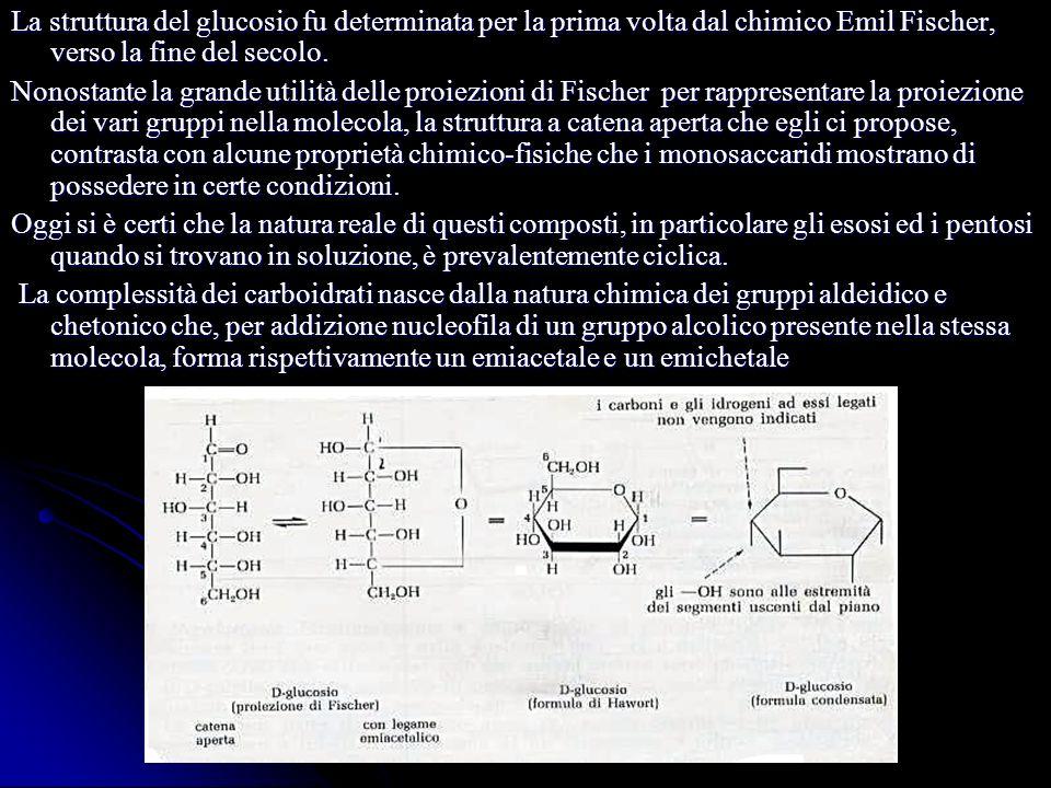 La struttura del glucosio fu determinata per la prima volta dal chimico Emil Fischer, verso la fine del secolo.